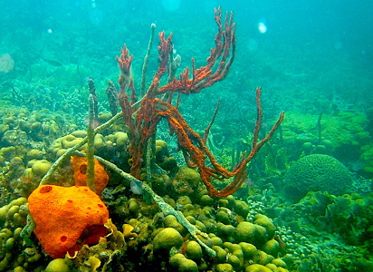 Diving in Bocas Del Toro